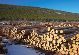 В Томской области создан лесопромышленный кластер